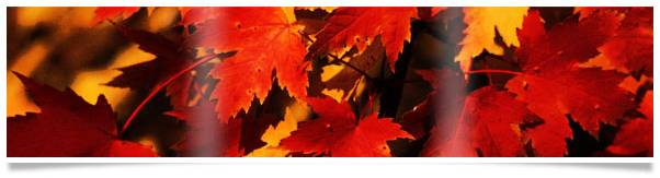 Happy Thanksgiving Autumn Minerals HUmineral HUmic Health - Immune Boost