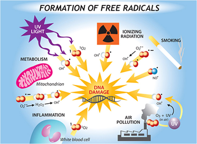 HUmineral humic fulvic acid minerals stops the Formation of free radicals