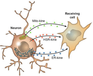 HUmineral healthy cells reduce Oxidation increase Electrolytes and Polyphenols credit nih